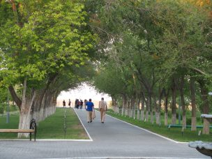 Walkway of trees